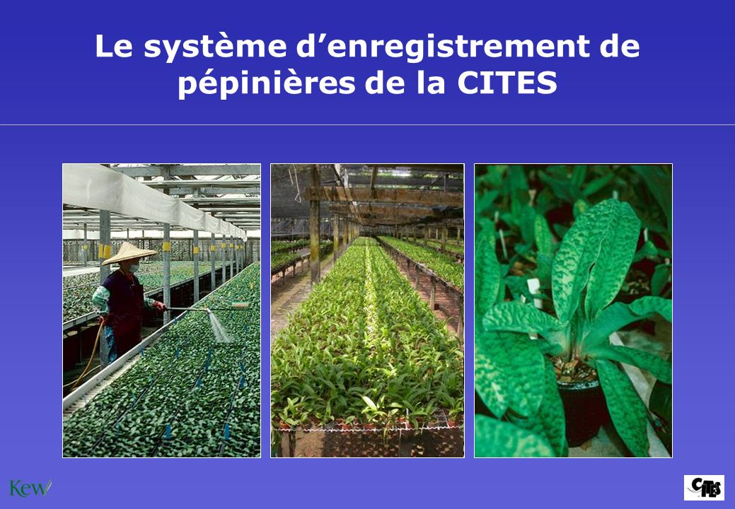 Le système d'enregistrement de pépinières de la CITES