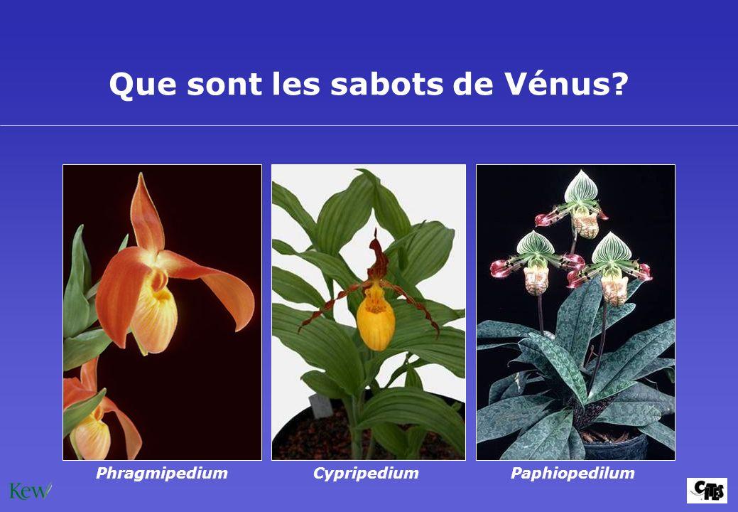 Que sont les sabots de Vénus