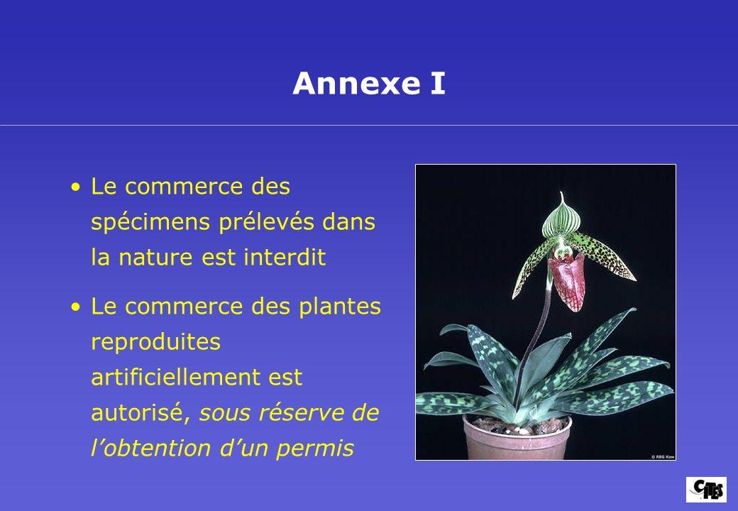 La CITES et les Plantes Buts et mise en oeuvre 10. Annexe I. Le commerce des spécimens prélevés dans la nature est interdit.