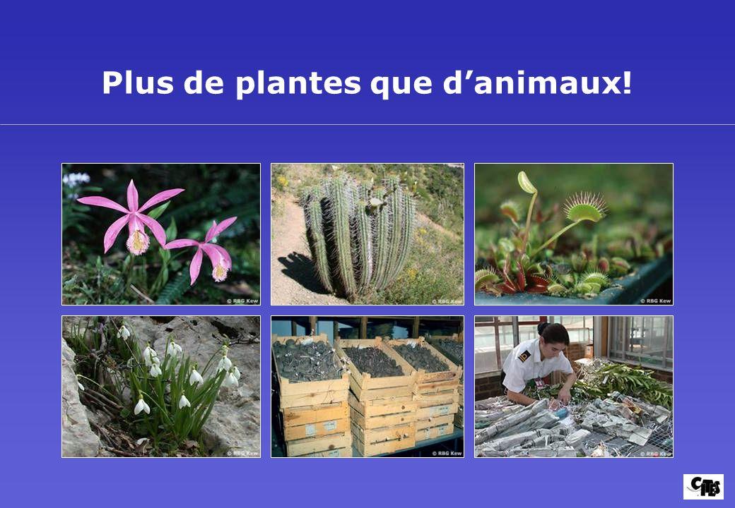 Plus de plantes que d'animaux!