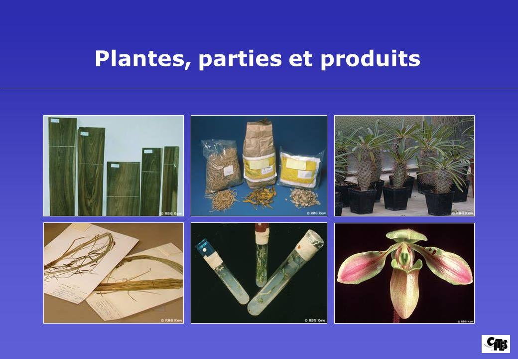 Plantes, parties et produits