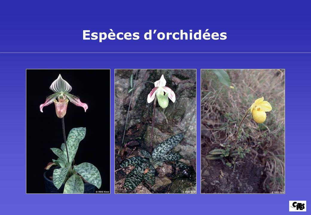 Groupes de plantes couverts par la CITES 20
