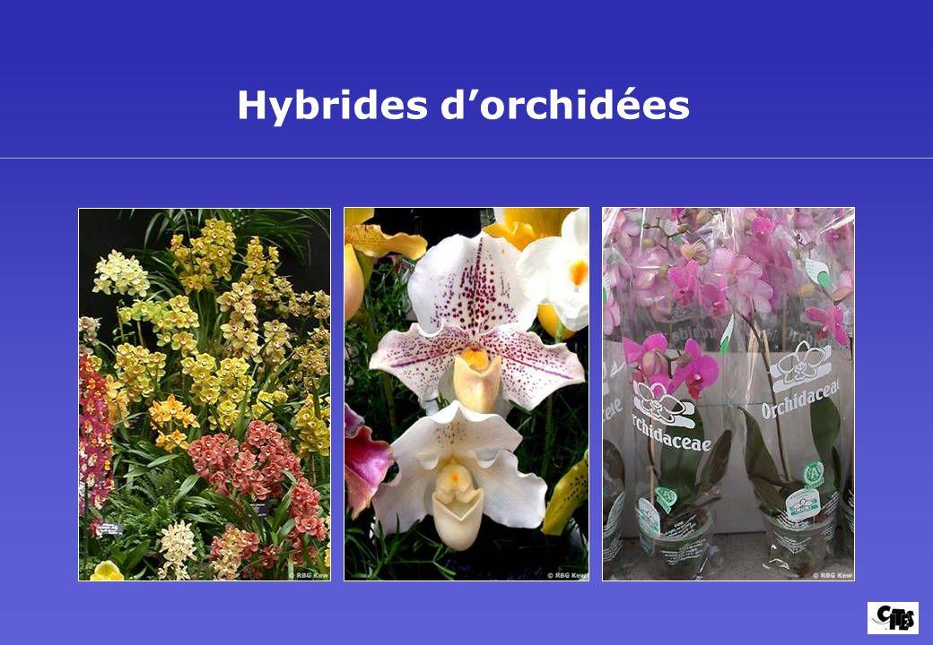 Groupes de plantes couverts par la CITES 21