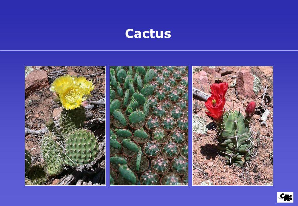 Groupes de plantes couverts par la CITES 22