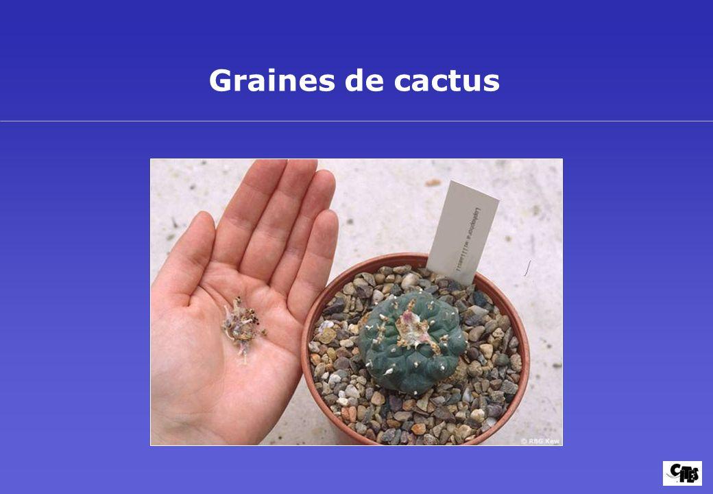 Groupes de plantes couverts par la CITES 23