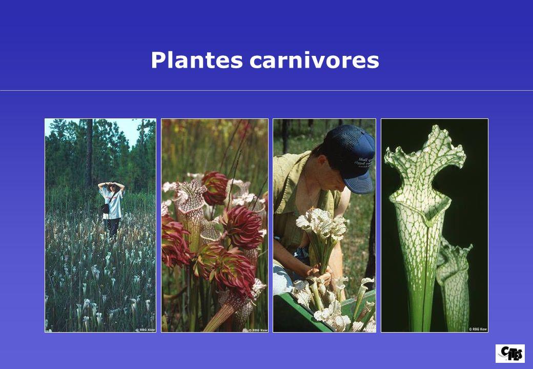 Groupes de plantes couverts par la CITES 24