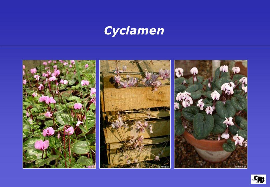 Groupes de plantes couverts par la CITES 27