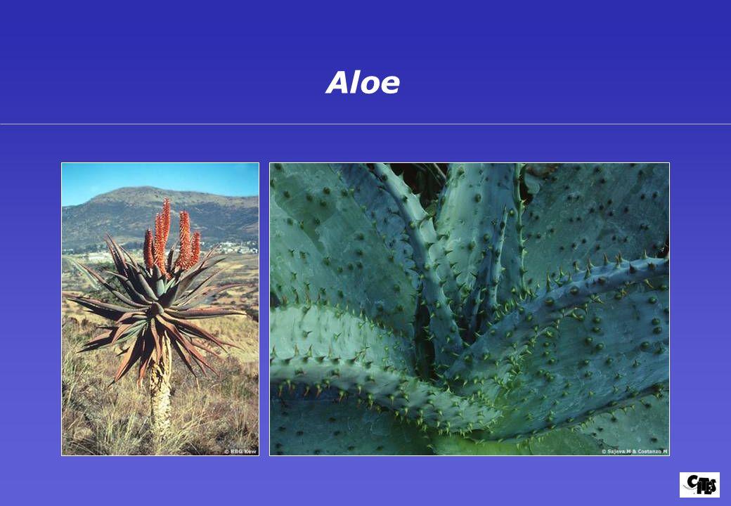 Groupes de plantes couverts par la CITES 28