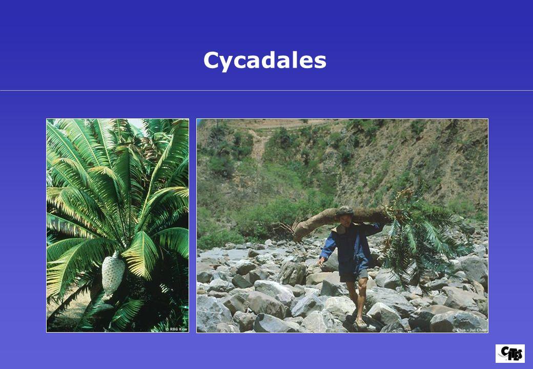 Groupes de plantes couverts par la CITES 30