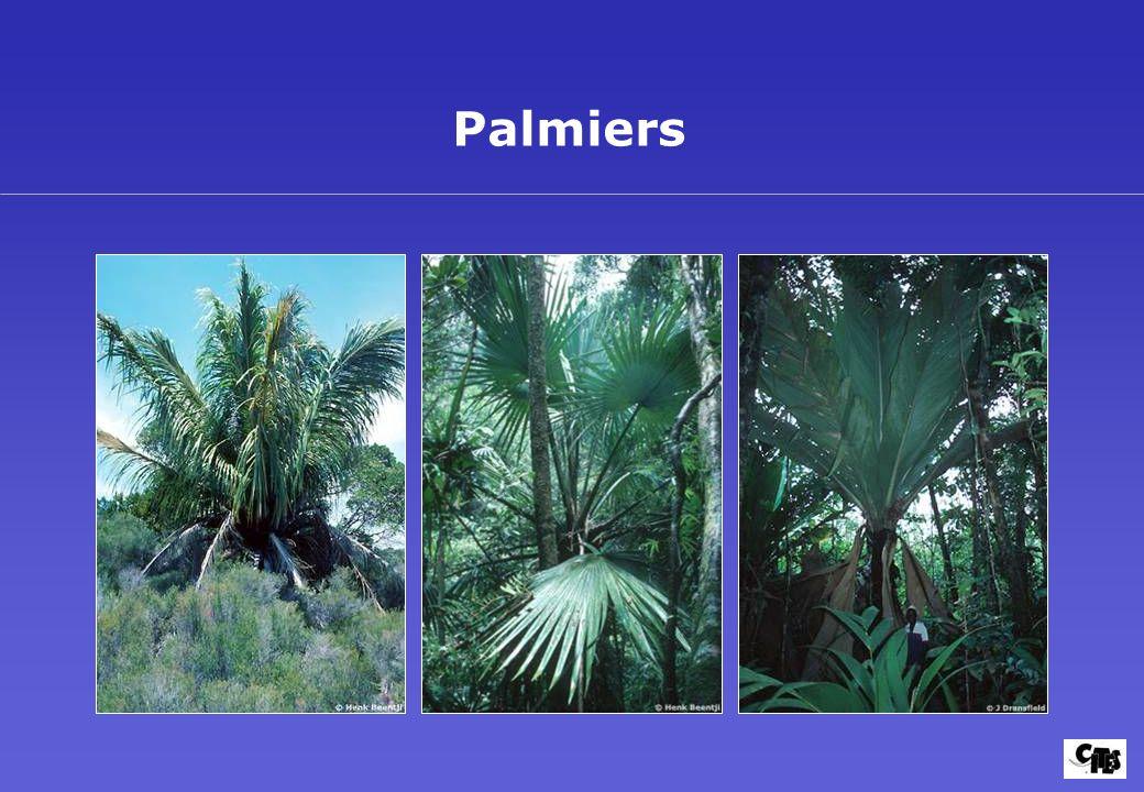 Groupes de plantes couverts par la CITES 31