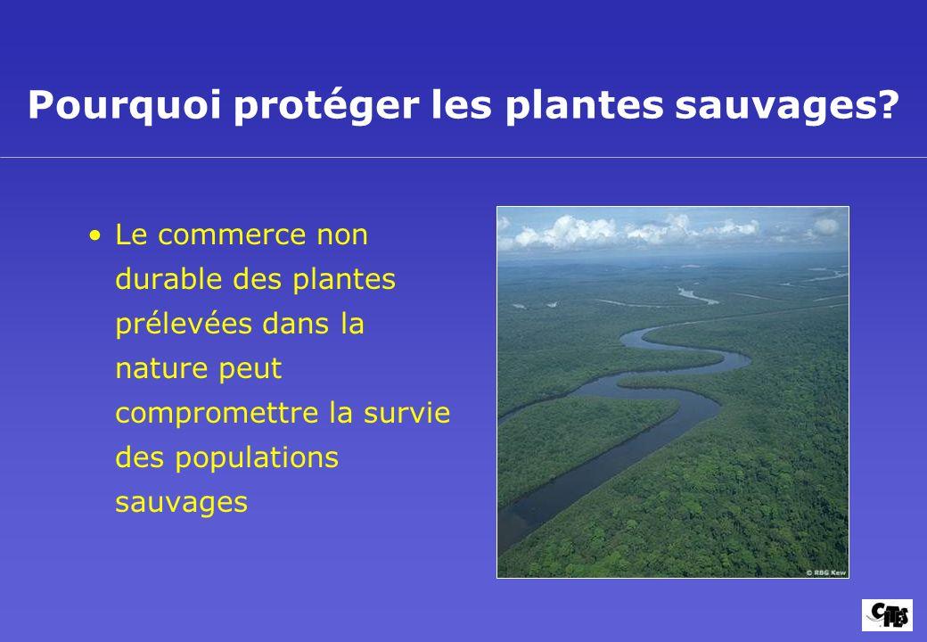 Pourquoi protéger les plantes sauvages