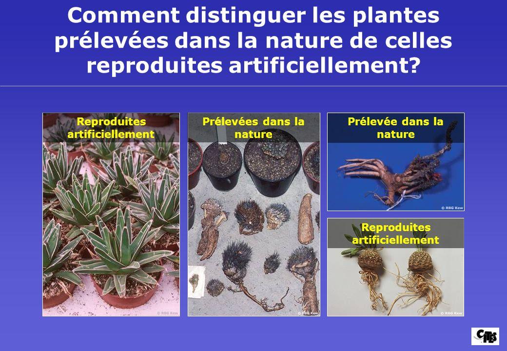La CITES et les Plantes Mise en application et lutte contre la fraude 41.
