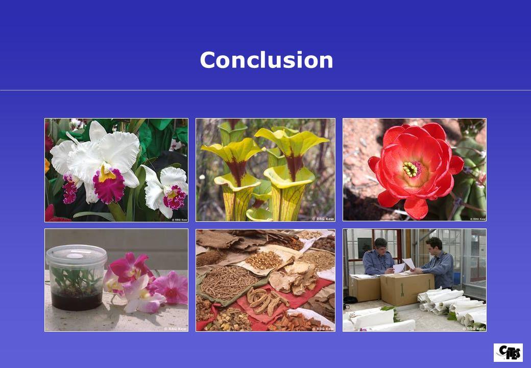 Conclusion Dia 46: Conclusion