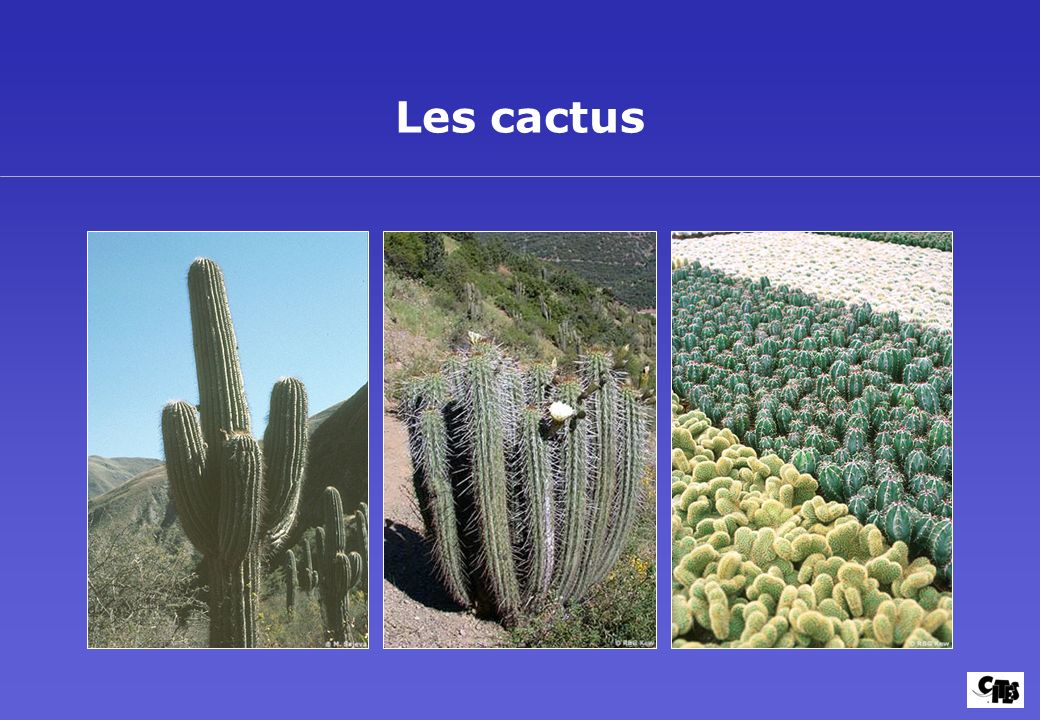 Introduction aux plantes succulentes 8