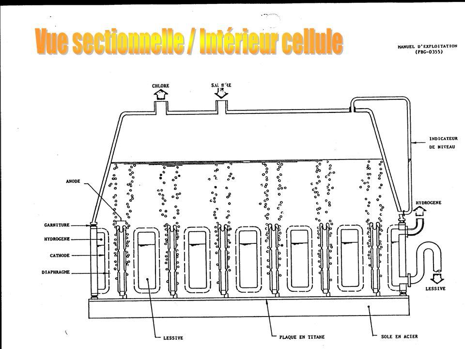 Vue sectionnelle / Intérieur cellule