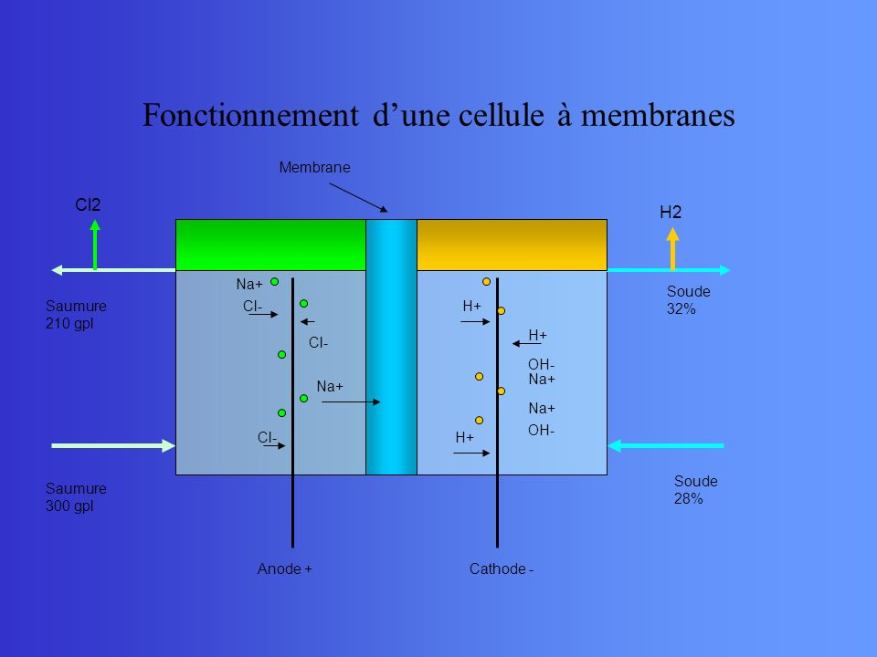 Fonctionnement d'une cellule à membranes