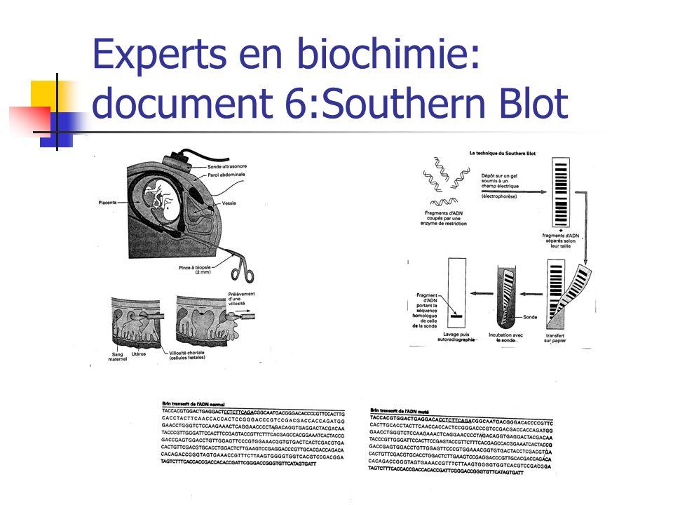 Experts en biochimie: document 6:Southern Blot