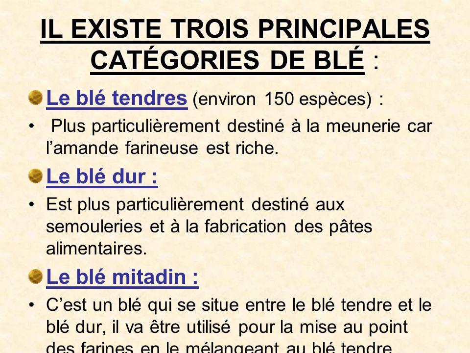 IL EXISTE TROIS PRINCIPALES CATÉGORIES DE BLÉ :