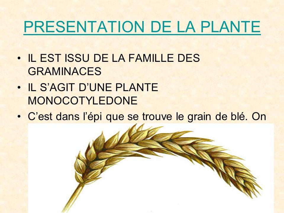 PRESENTATION DE LA PLANTE