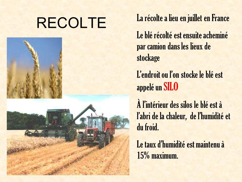 RECOLTE La récolte a lieu en juillet en France