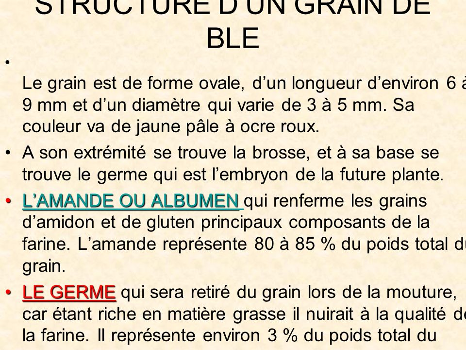 STRUCTURE D'UN GRAIN DE BLE