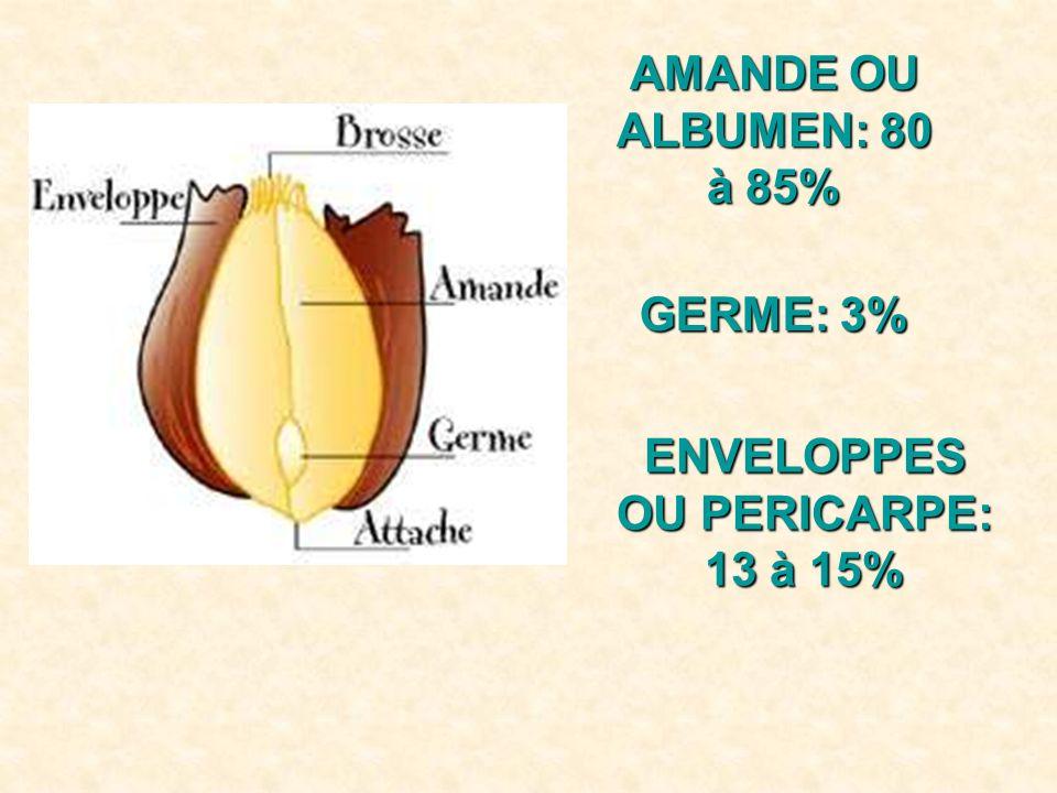 ENVELOPPES OU PERICARPE: 13 à 15%