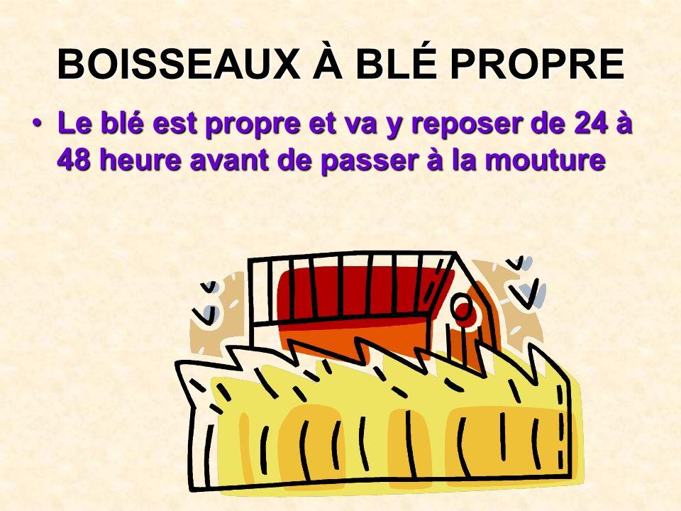 BOISSEAUX À BLÉ PROPRE Le blé est propre et va y reposer de 24 à 48 heure avant de passer à la mouture.