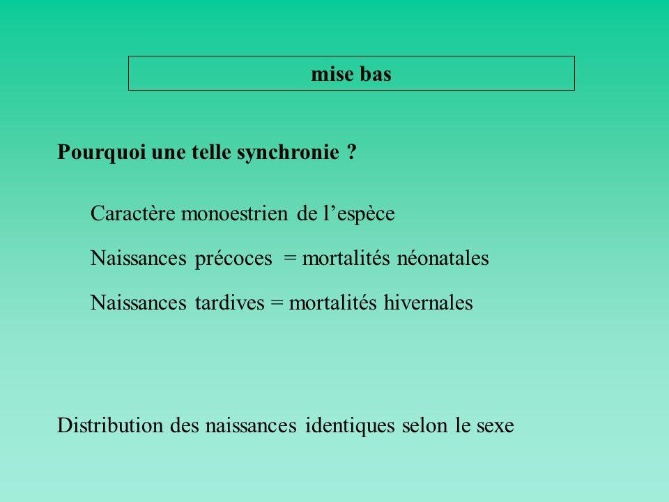 mise bas Pourquoi une telle synchronie Caractère monoestrien de l'espèce. Naissances précoces = mortalités néonatales.