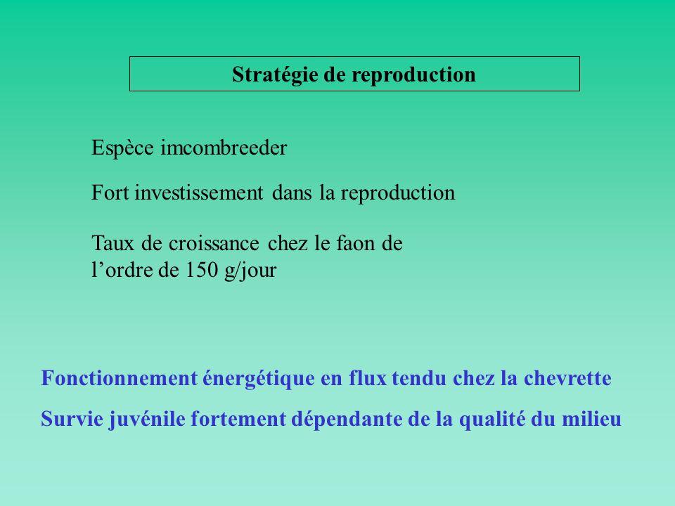 Stratégie de reproduction