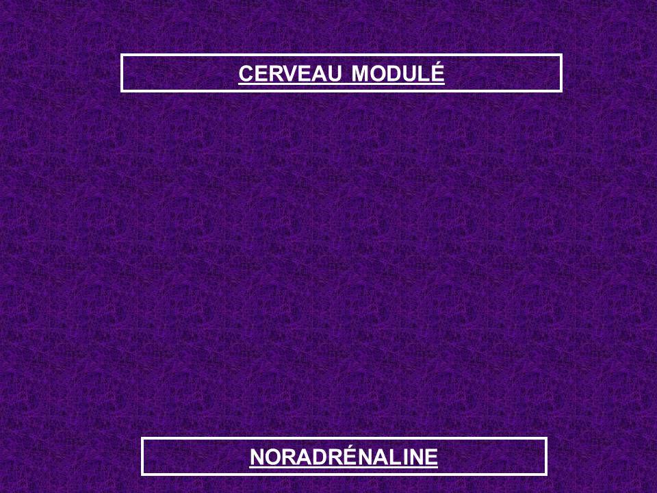 CERVEAU MODULÉ NORADRÉNALINE