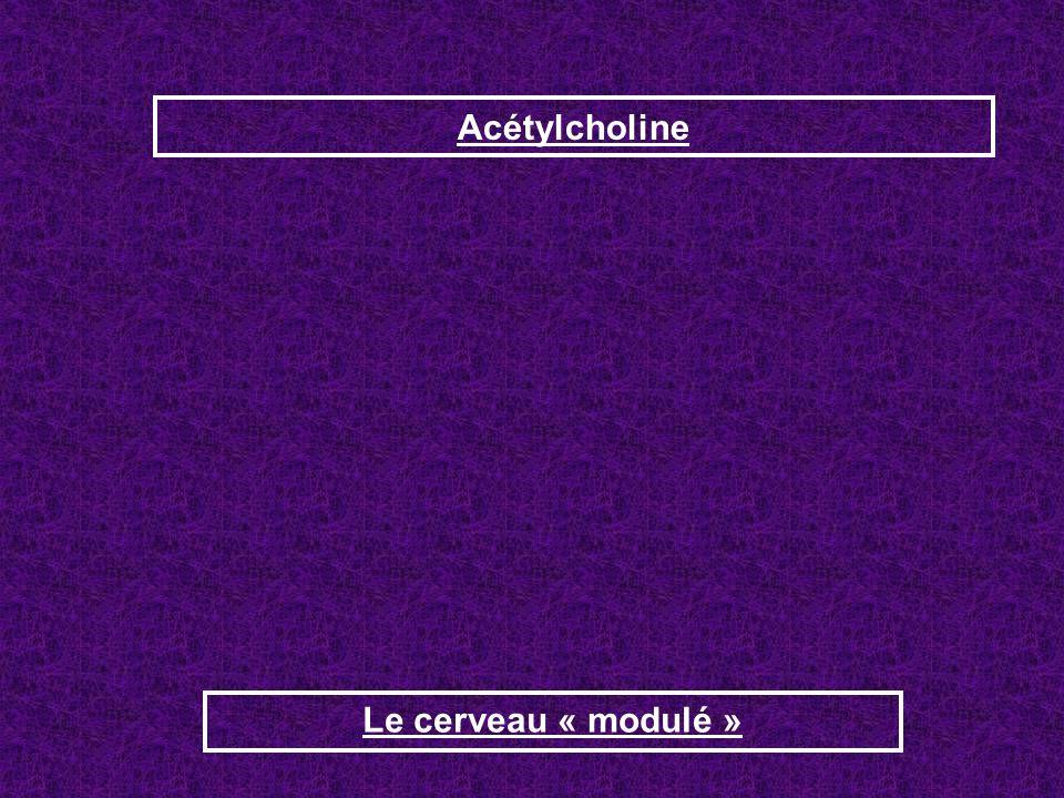 Acétylcholine Le cerveau « modulé »