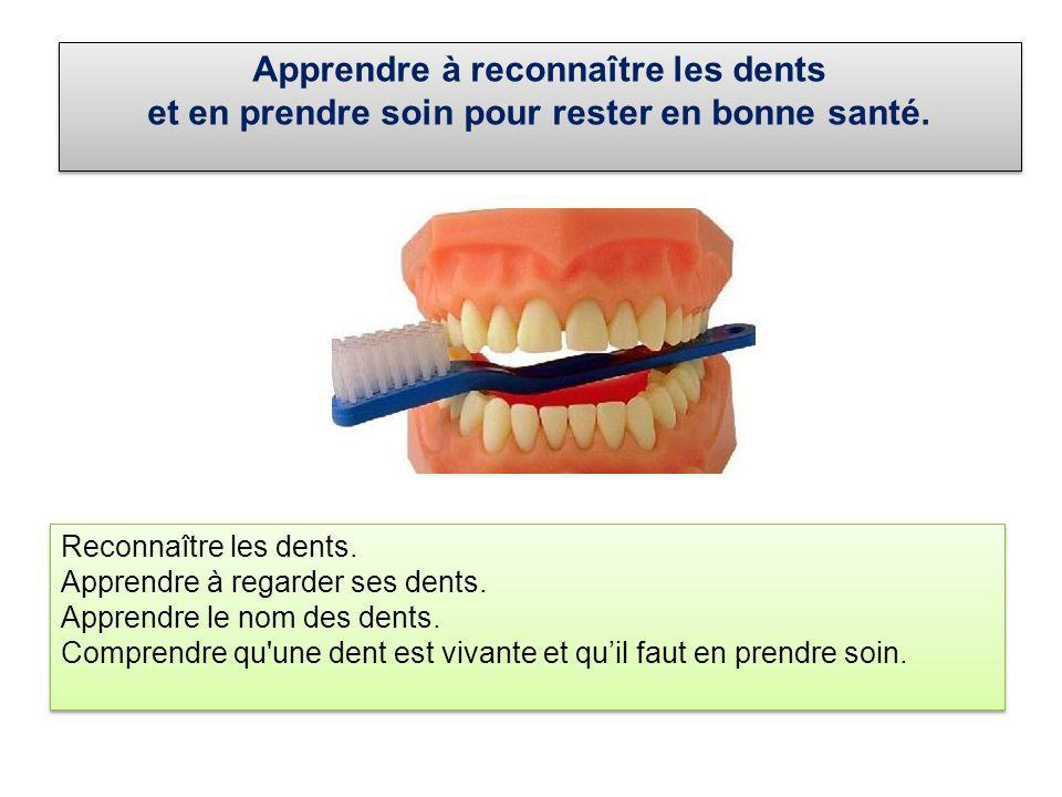 Apprendre à reconnaître les dents