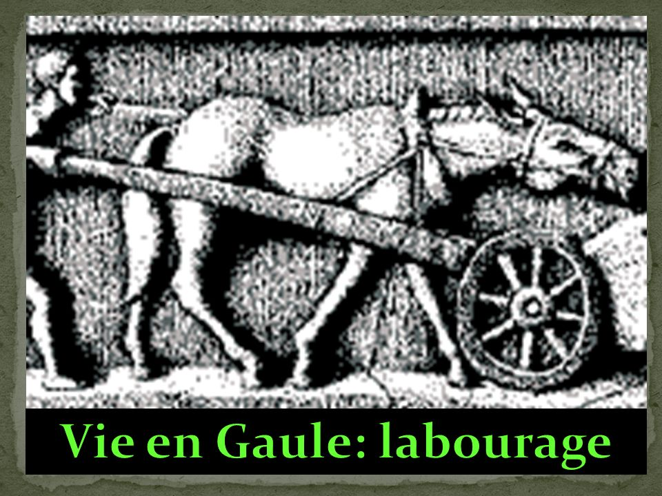 Vie en Gaule: labourage