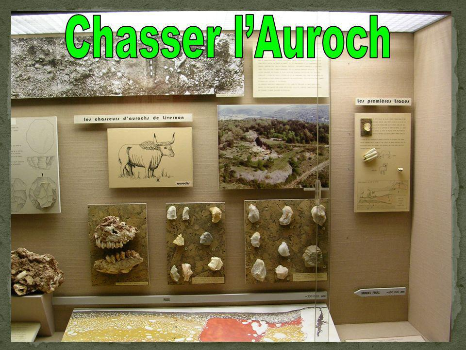 Chasser l'Auroch