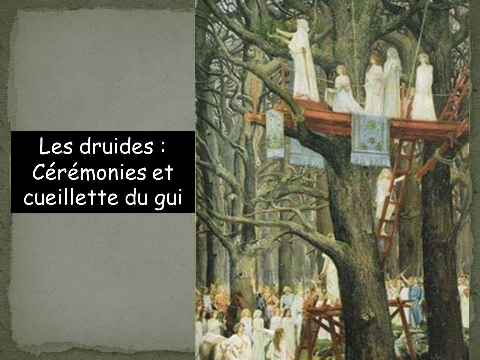 Les druides : Cérémonies et cueillette du gui
