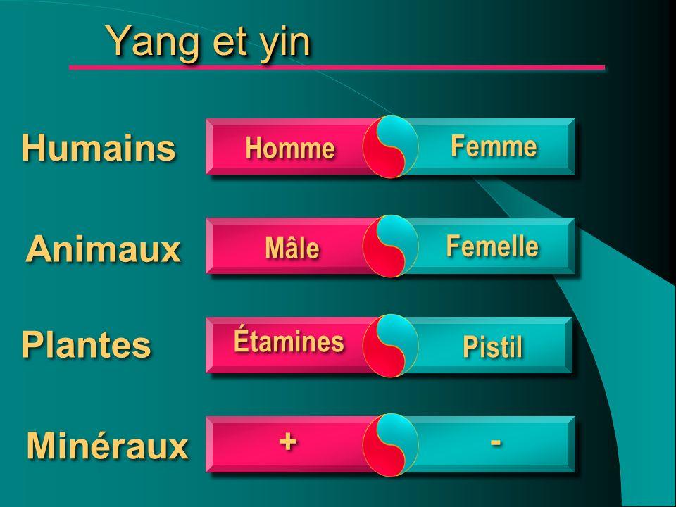 Yang et yin Humains Animaux Plantes Minéraux + - Homme Femme Mâle