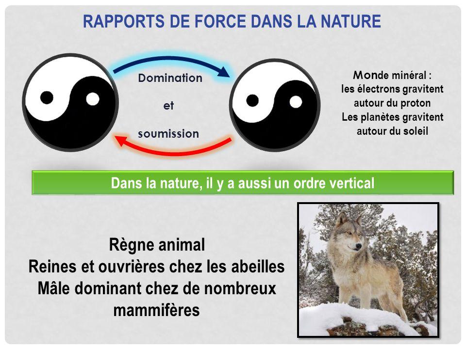 Rapports de force dans la nature