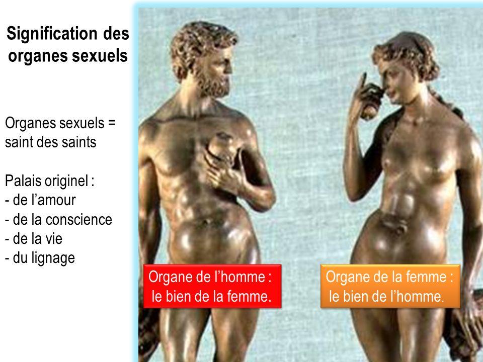 Signification des organes sexuels