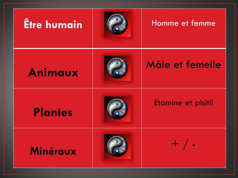 Animaux Plantes Être humain Mâle et femelle + / - Minéraux