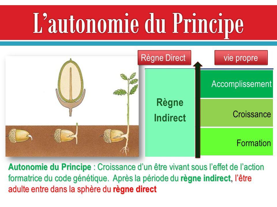 L'autonomie du Principe