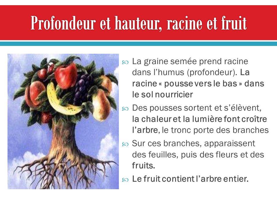 Profondeur et hauteur, racine et fruit