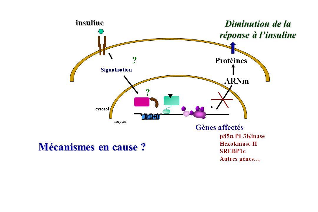 Mécanismes en cause Diminution de la réponse à l'insuline