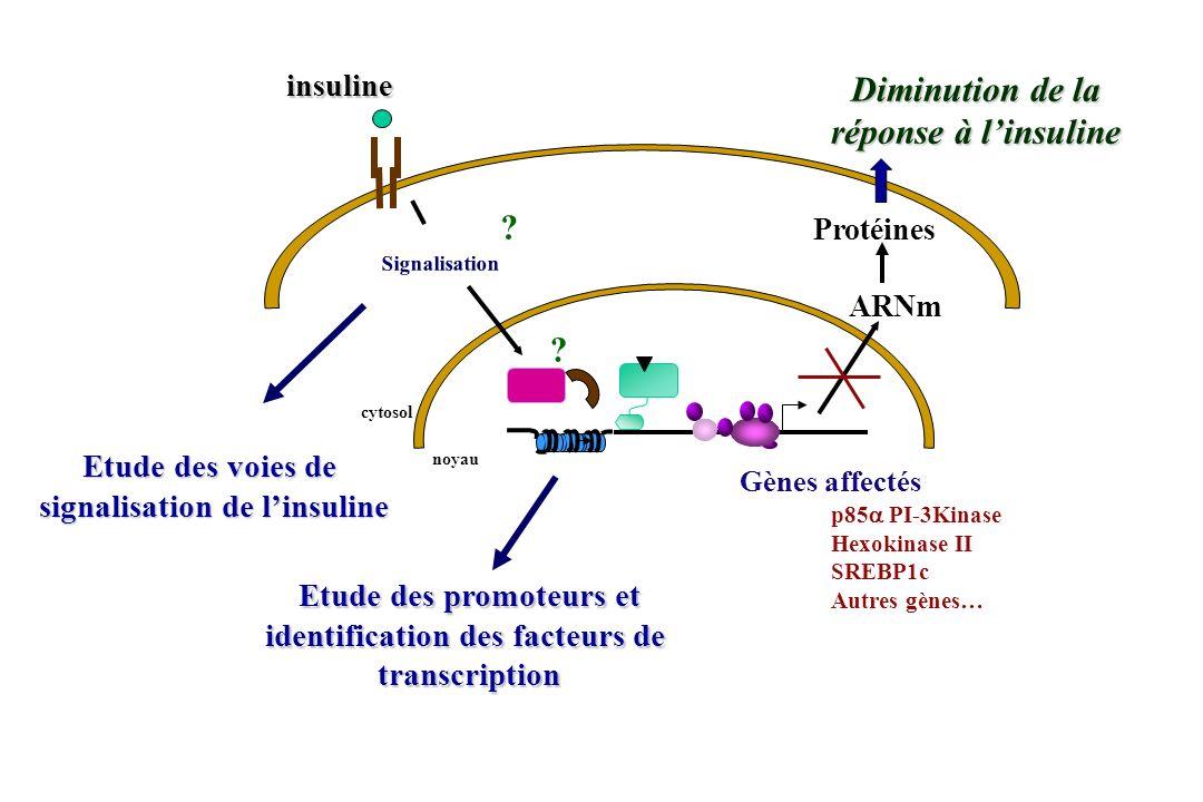 Diminution de la réponse à l'insuline