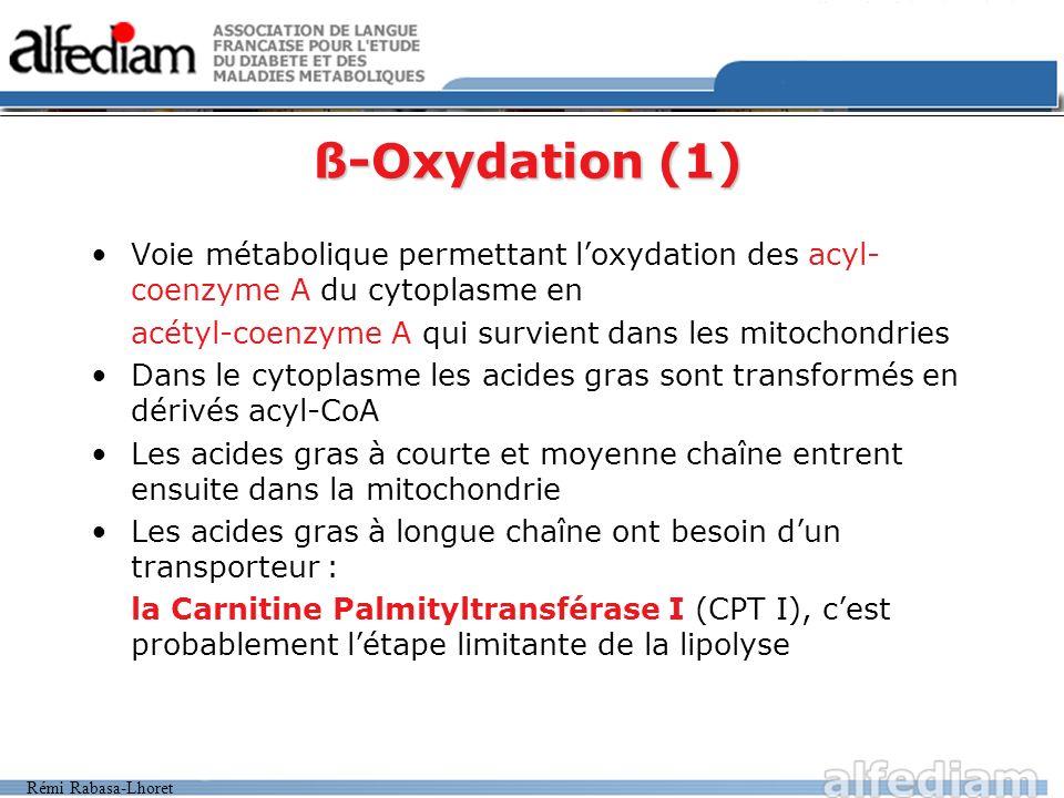 ß-Oxydation (1)Voie métabolique permettant l'oxydation des acyl-coenzyme A du cytoplasme en. acétyl-coenzyme A qui survient dans les mitochondries.