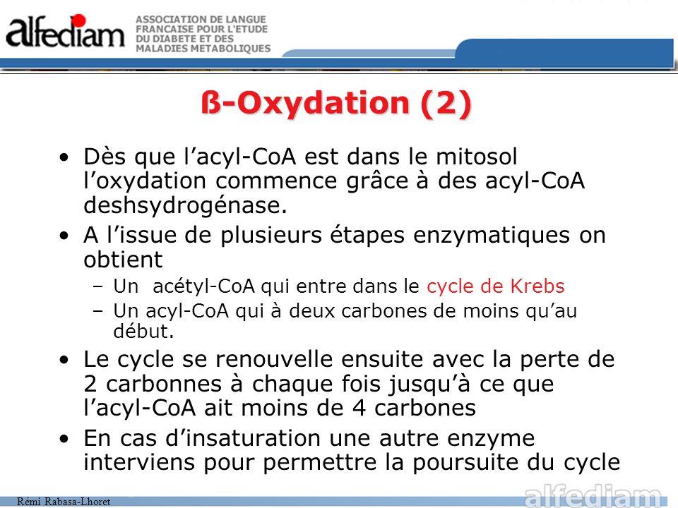 ß-Oxydation (2)Dès que l'acyl-CoA est dans le mitosol l'oxydation commence grâce à des acyl-CoA deshsydrogénase.