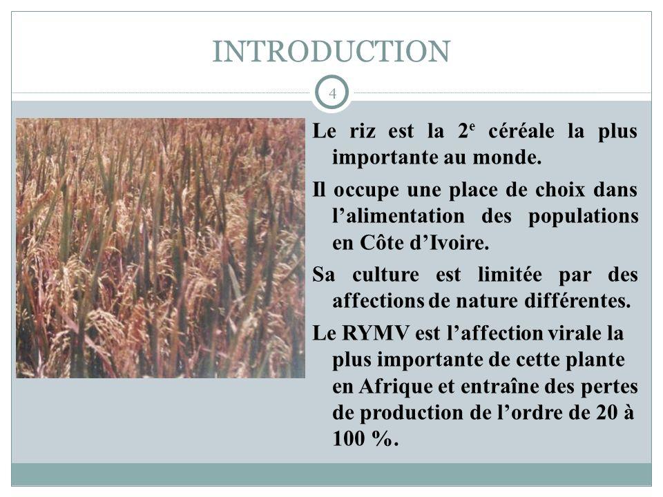INTRODUCTION Le riz est la 2e céréale la plus importante au monde.