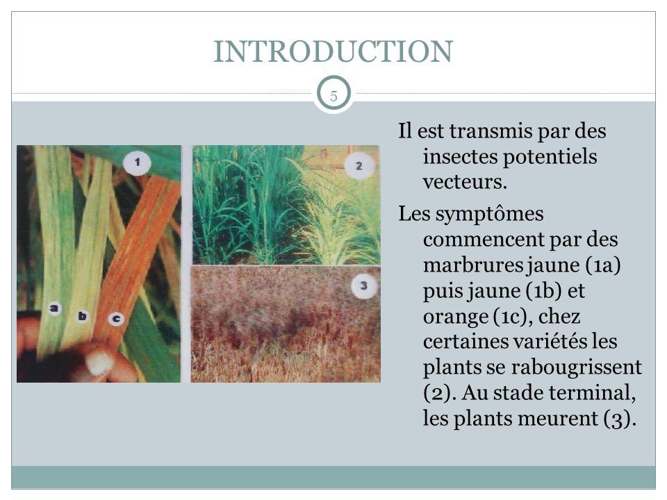 INTRODUCTION Il est transmis par des insectes potentiels vecteurs.