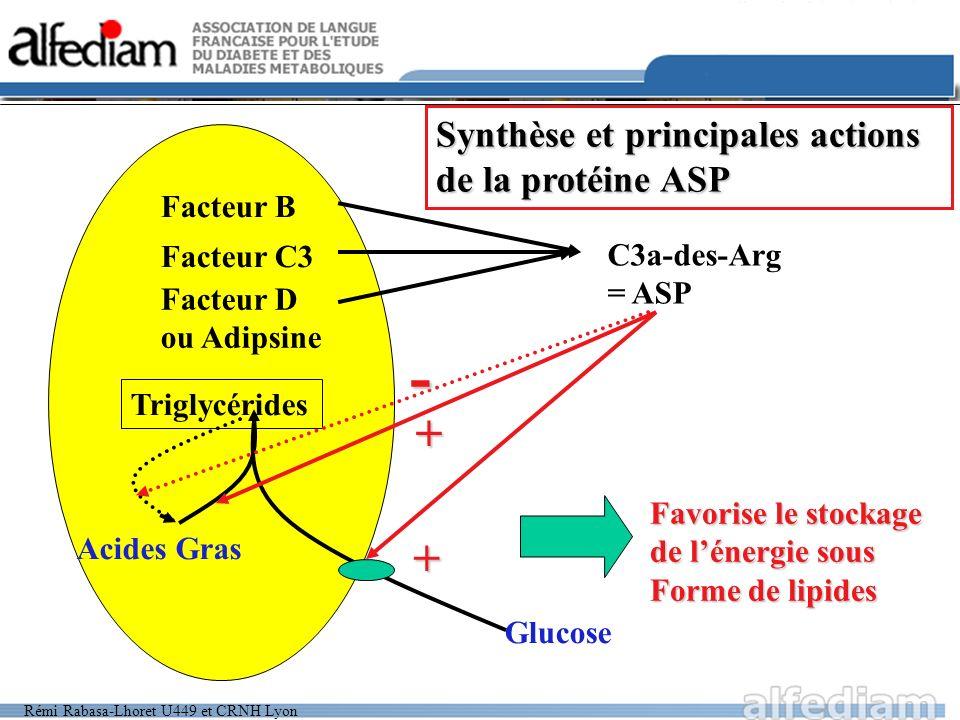 - + + Synthèse et principales actions de la protéine ASP Facteur B