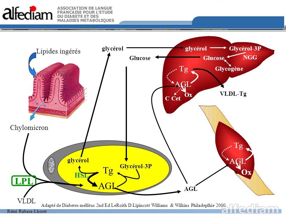 Tg LPL AGL Tg AGL Tg AGL Ox Lipides ingérés Chylomicron HSL VLDL