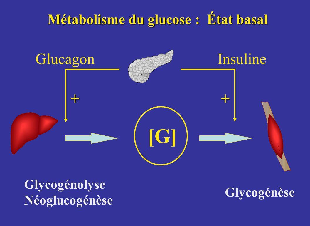 Métabolisme du glucose : État basal